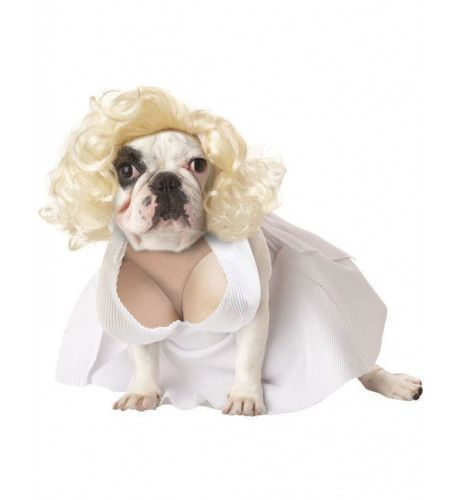 Marilyn Monroe Hond Kostuum