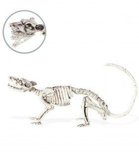 Eng Ratten Skelet