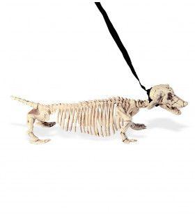 Eng Skelet Tekkel Met Riem